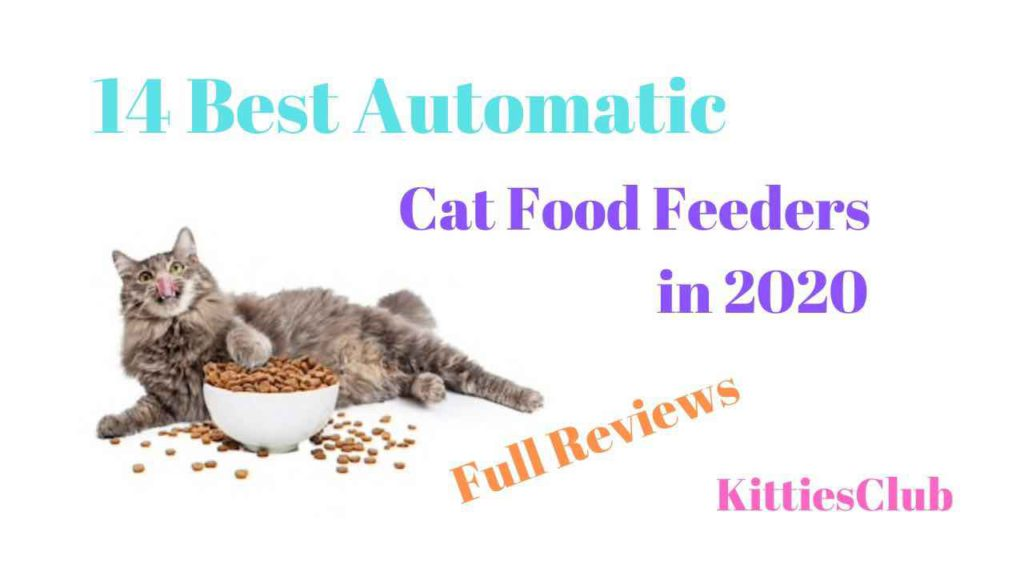 best automatic cat food feeders