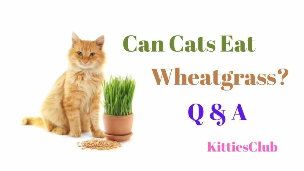 can cats eat wheatgrass