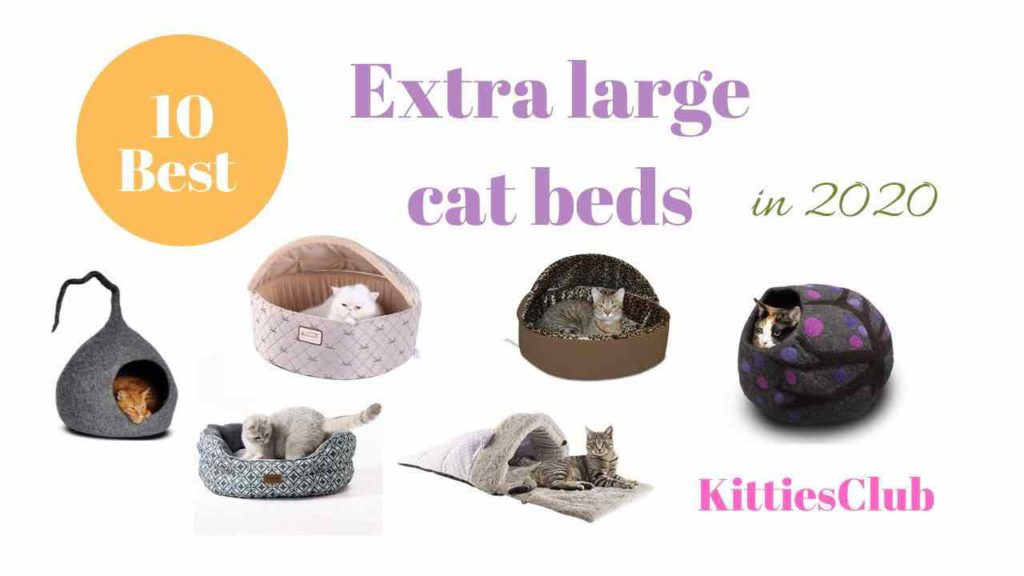 extra large cat beds
