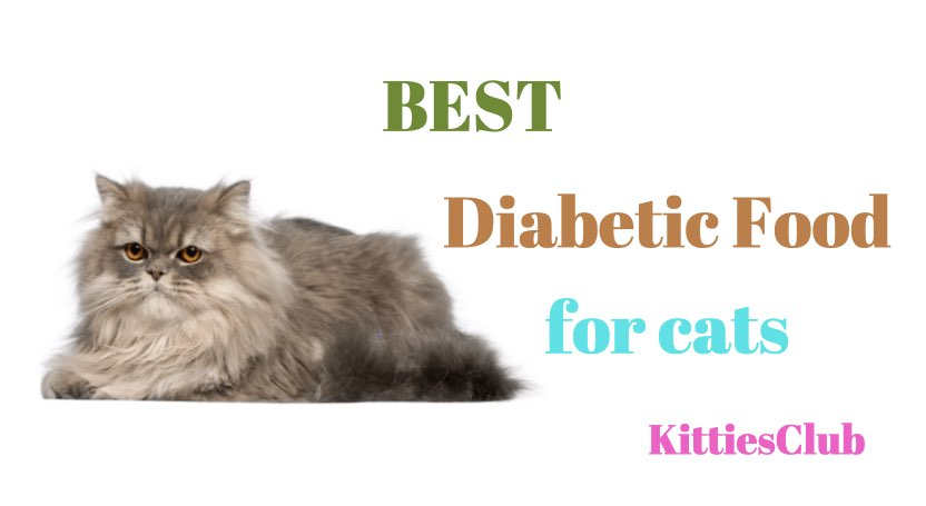 best diabetic food for cats