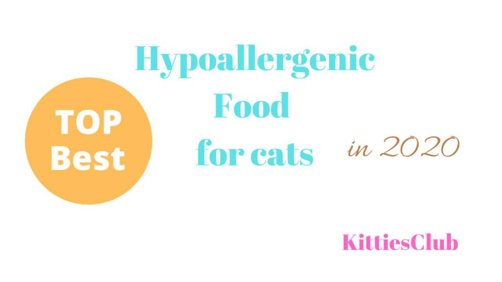 best hypoallergenic food for cats
