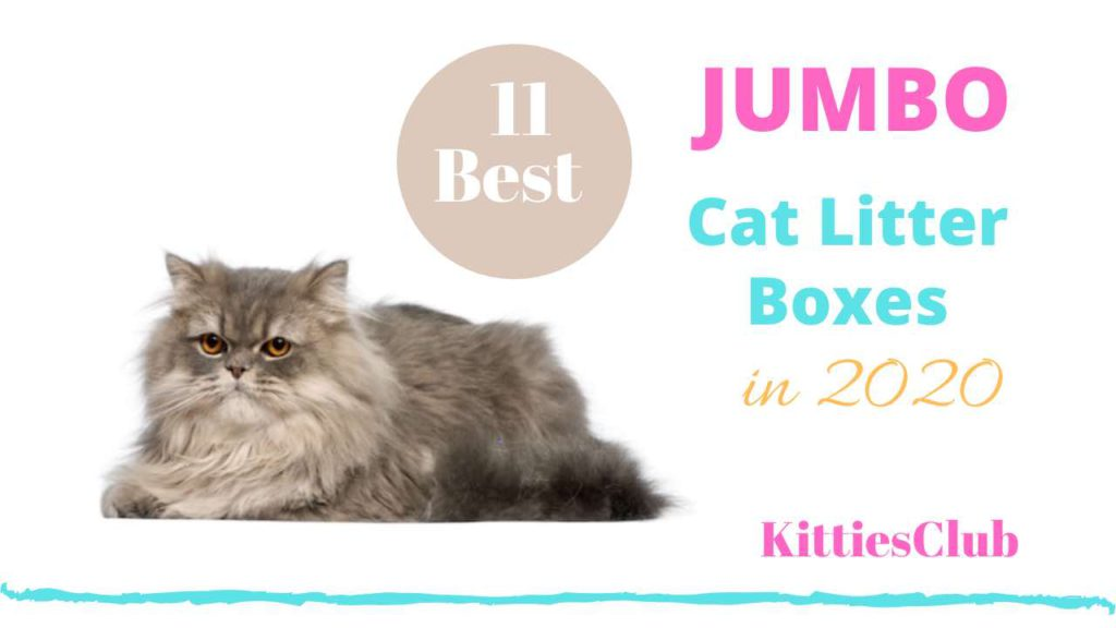 best jumbo cat litter boxes