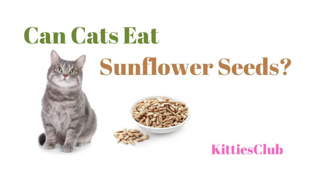 can cats eat sunflower seeds
