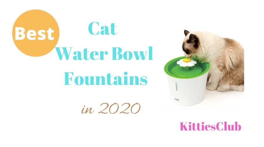 cat water bowl fountains
