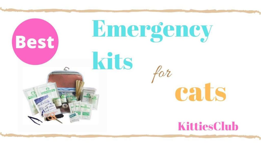 emergency kit for cat