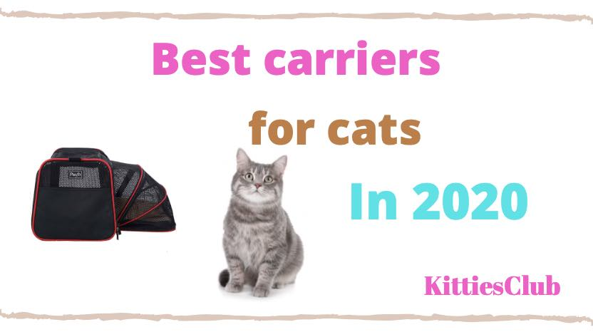 best carriers for cats