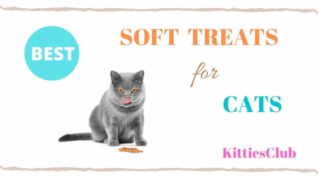 best soft cat treats