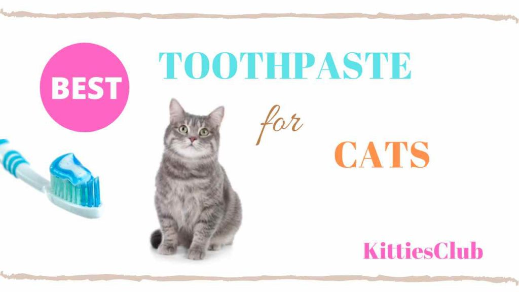 best toothpaste for cats