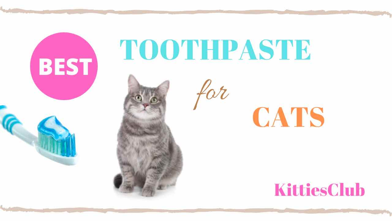 8 Best Toothpaste For Cats For 2020 Full Guide And Reviews Kitties Club
