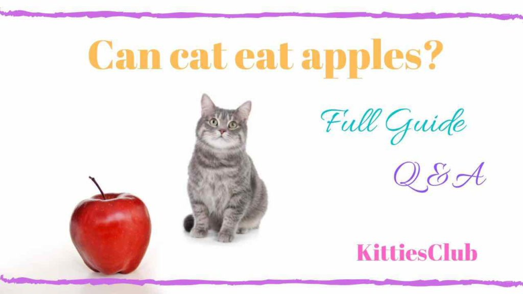 can cats eat apple