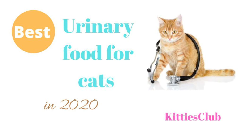 best urinary food for cats